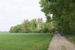 Wanderweg entlang des Waldrands